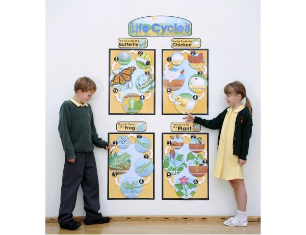 Life Cycles Bulletin Board Set 4+